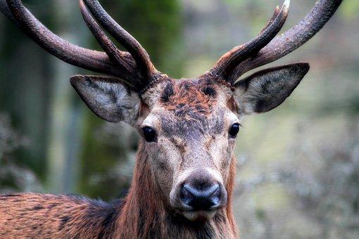 significado venado animal de poder animales de poder animal totémico animales totémicos